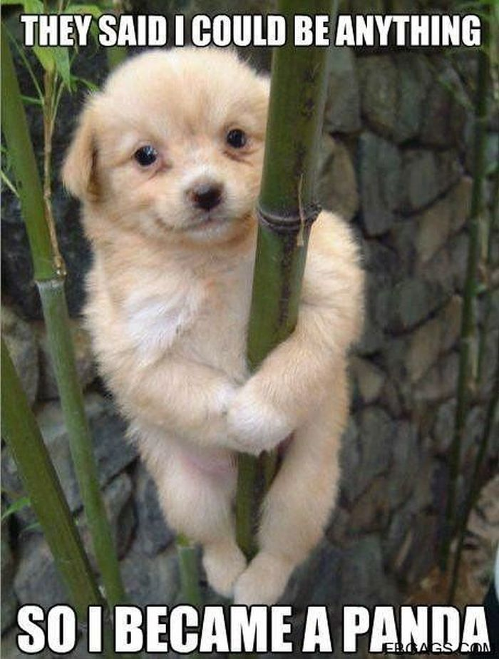best cute animals ideas on pinterest adorable animals cute