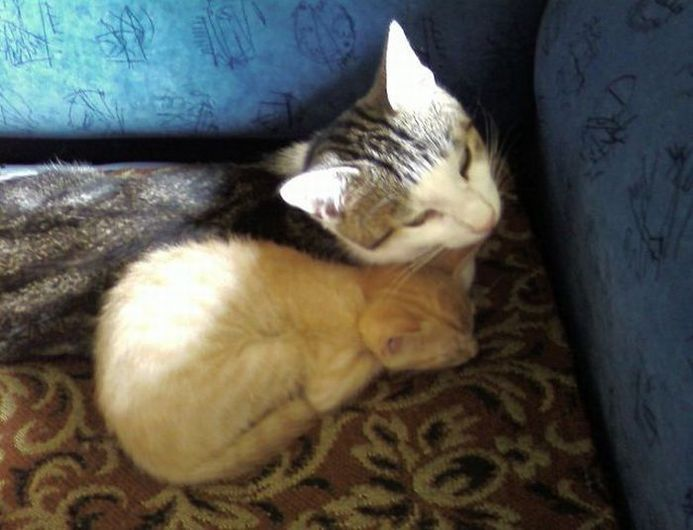 best images of cute cats ideas on pinterest images of cute
