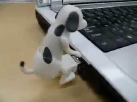 dog cat animated xxx